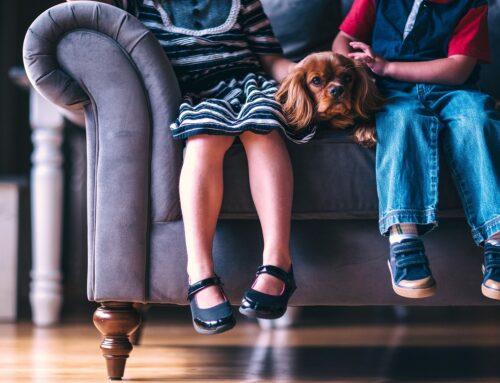 ¿Cuál es el mejor tejido de sofá si tienes mascotas?
