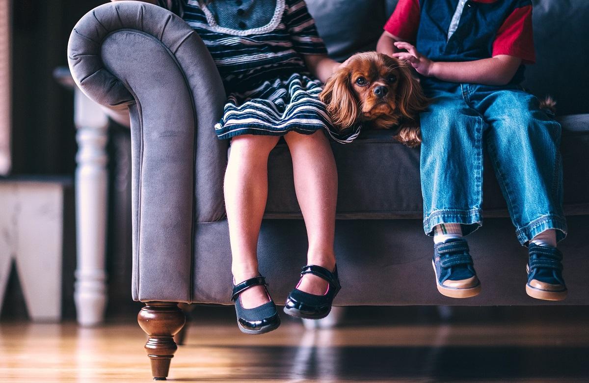 Mejor tejido de sofá si tienes mascotas